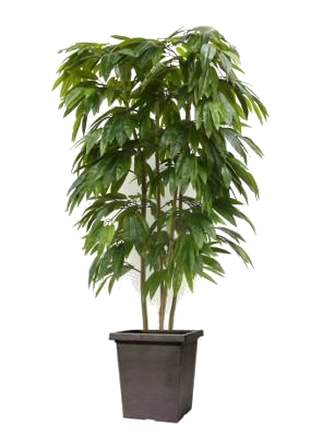 Mango Tree - Wedding Gift Registry Nigeria