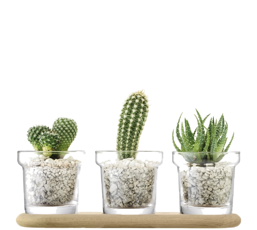 Plant Trio Pot Set and Oak Base - Wedding Gift Registry Nigeria