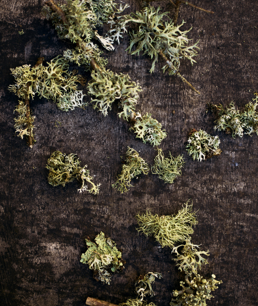 up and over shot of lichen and moss