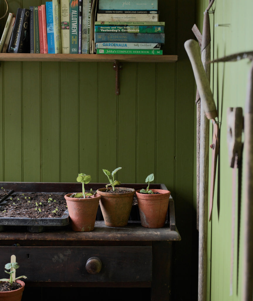 green wooden shed with book shelve filled with gardening books, an old table with terracotta plant pots on with little seedlings poking out and tools hanging up on the wall