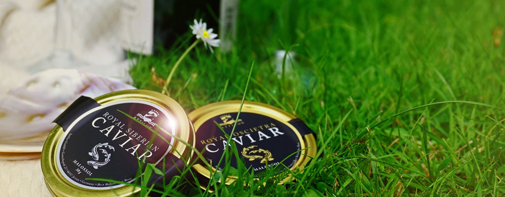 Attilus Caviar Perfect Summer Picnics