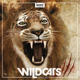 Wildcats - Tigers & Lions