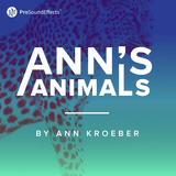 Ann's Animals