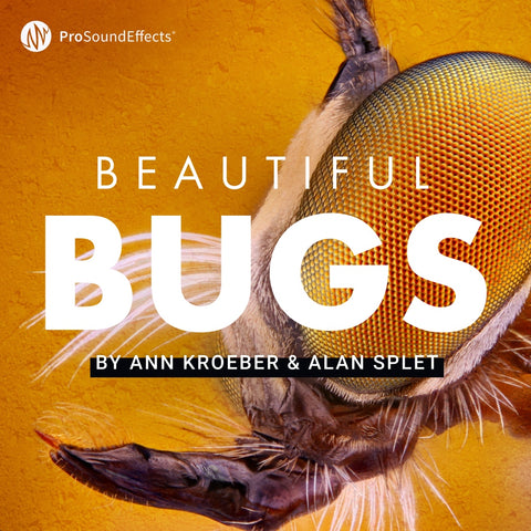 Beautiful Bugs