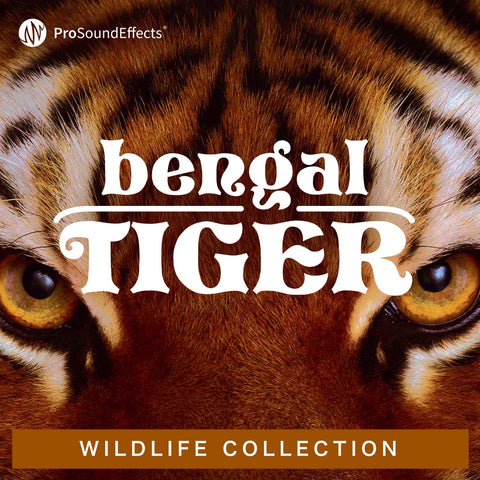 Wildlife Collection: Bengal Tiger