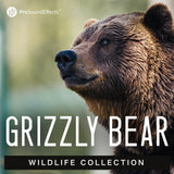 Wildlife Collection: Grizzly Bear
