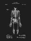 (V19) - Anatomical Skeleton - C. Fleck - 1911