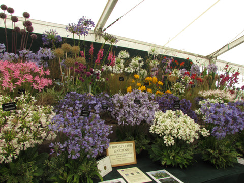 Tatton park display