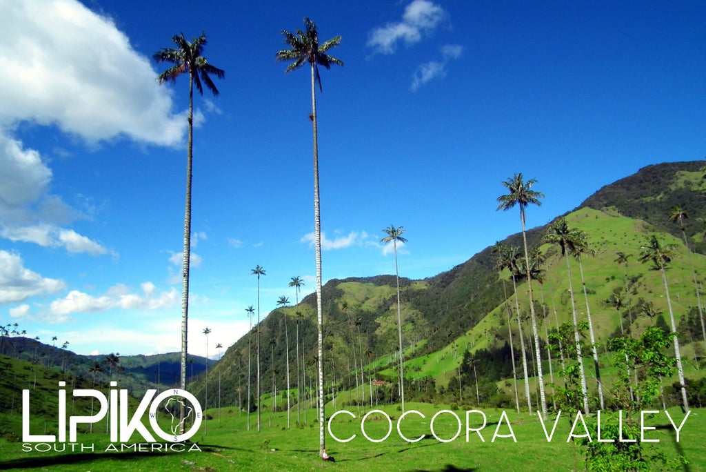 Photo-Cocora Valley