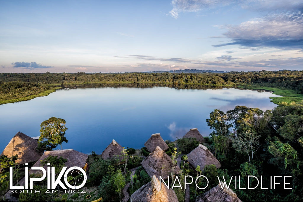 Photo-Napo Wildlife