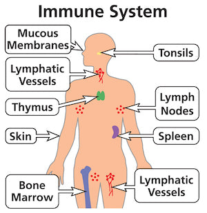 7 Things that kill your immune system