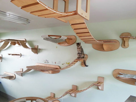 Designer cat shelves