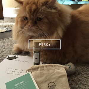 Friends of Tabby James - Percy