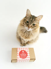 Tabby James Blog Image - Top 10 Valentine's Day Gifts for your Cats