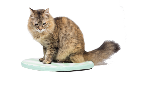 Kitty Nap Pad GREEN
