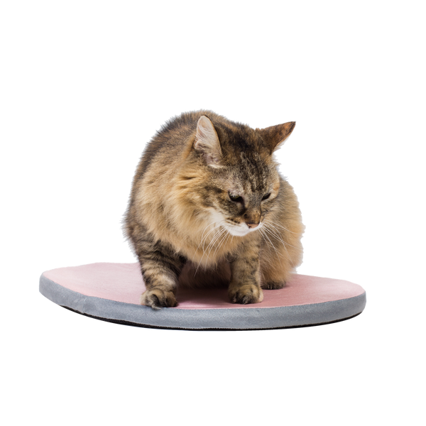 Kitty Nap Pad PINK