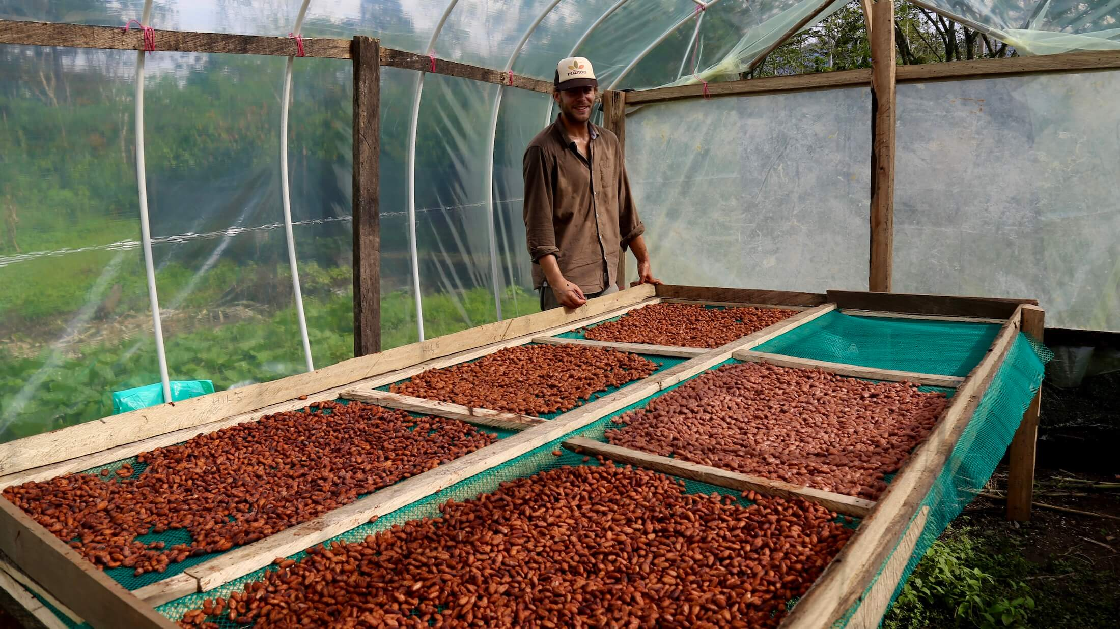 drying cacao with manoa chocolate