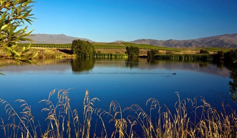 Image of a Central Otago vineyard bathed in sunshine