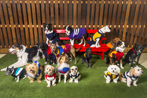 Official AFL Knitted Dog Jumpers
