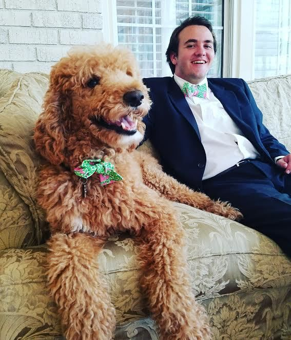 Matching Dog And Owner Bow Ties