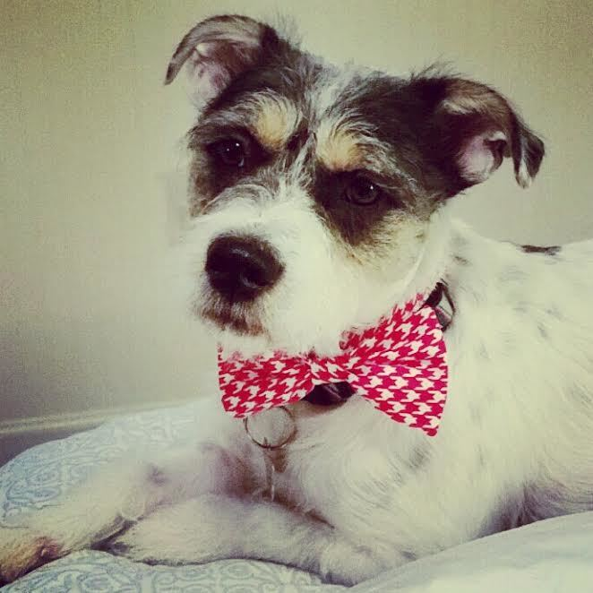Red And White Christmas Dog Collar Bow Tie