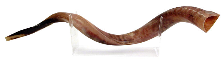 Medium Yemenite Shofar