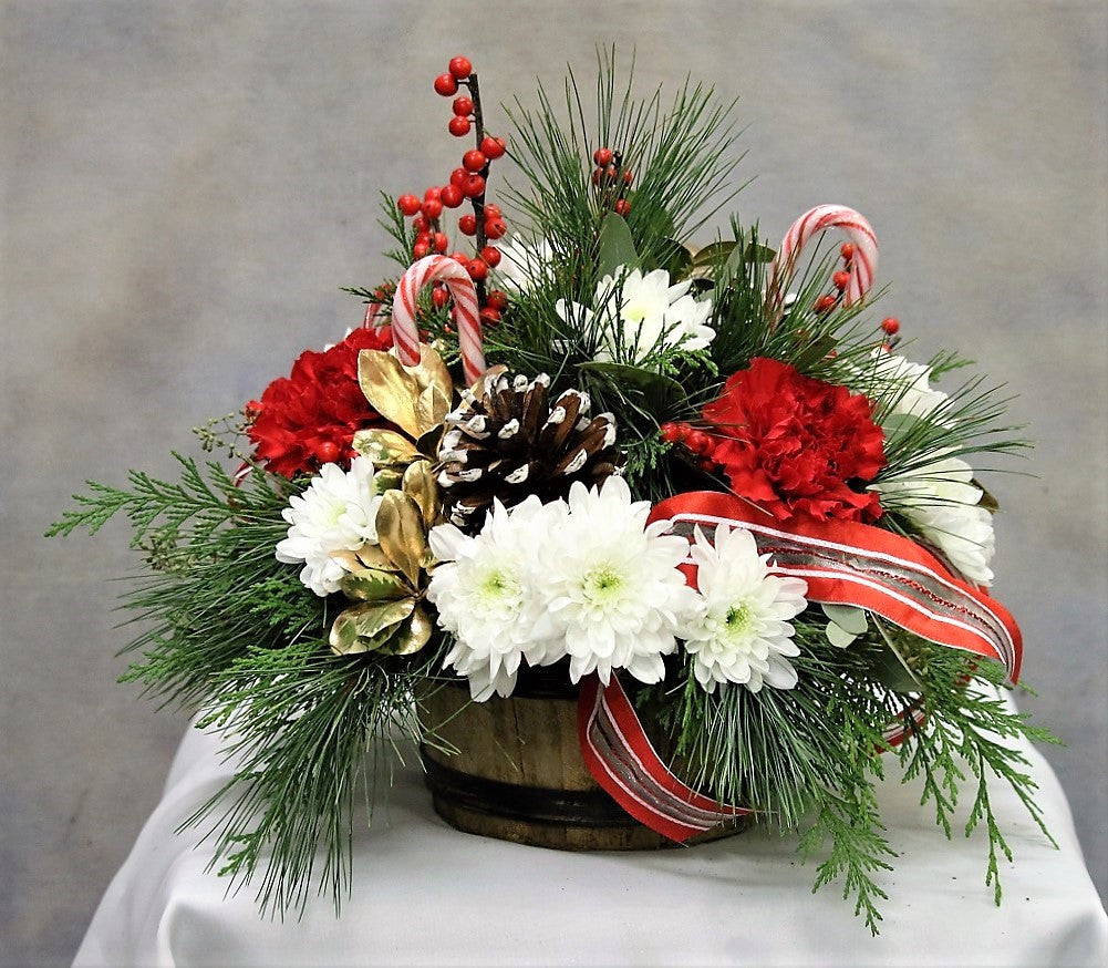 Candy Cane Delight Tlccd1 1 Talisman Flowers