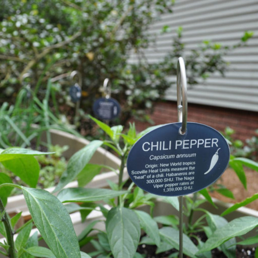 Slate Garden Plant Marker Label Sign Tags with Stainless Steel Stakes Set of 6