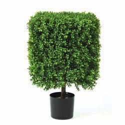 Boxwood Topiary