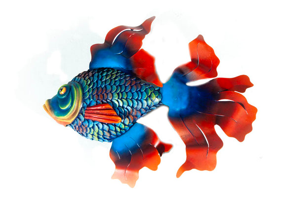 Blue/Red Angelfish