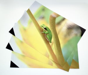 Frog placemats web