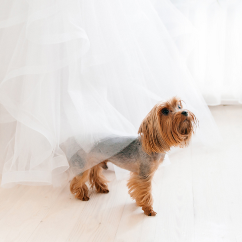 Cute puppies and dogs make great flower girls or part of the bridal party