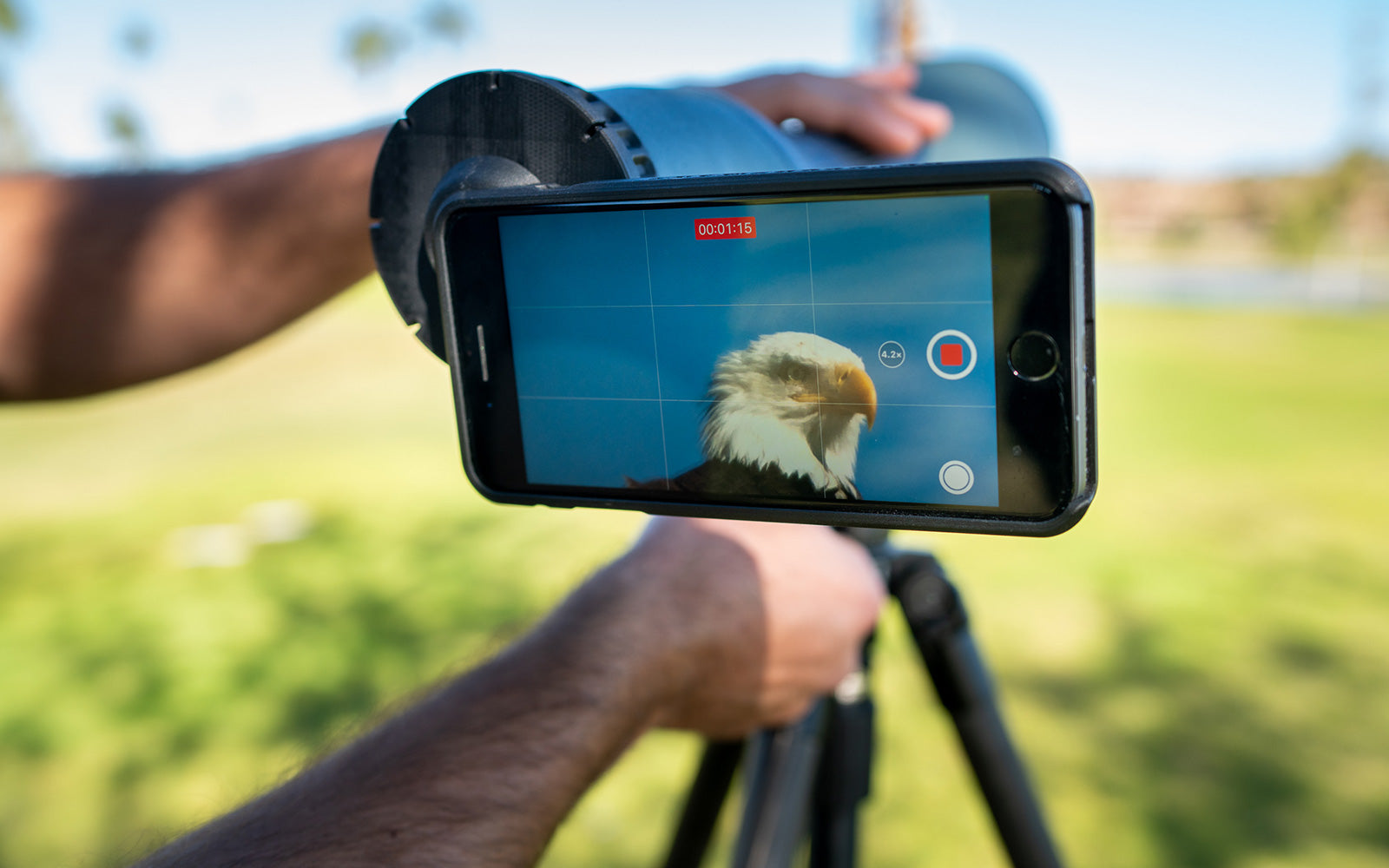 digiscoping with a tripod