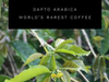 World's Rarest Coffee