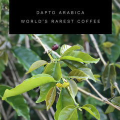 Dapto Arabica Worlds rarest coffee
