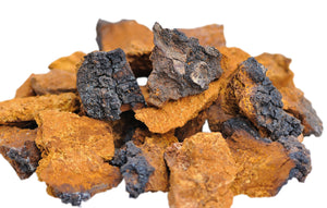 Is Chaga Mushroom an Antioxidant? What's Chaga's ORAC?