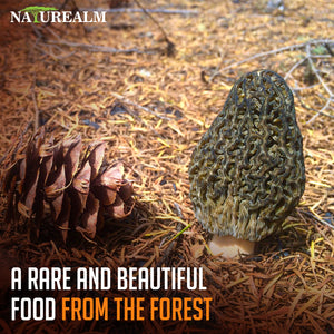 Morel Mushrooms (Whole, Dried) - Wild-Harvested