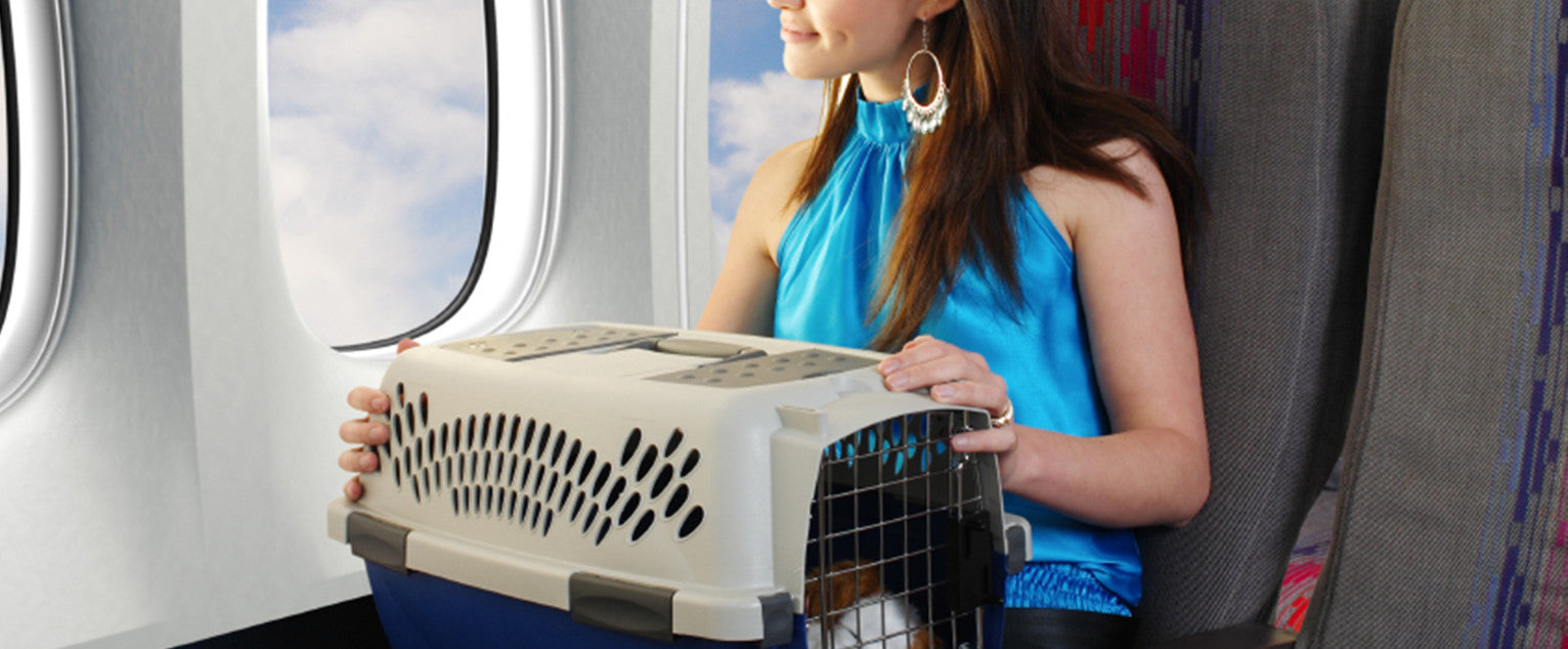 Airplane Traveling With Dogs