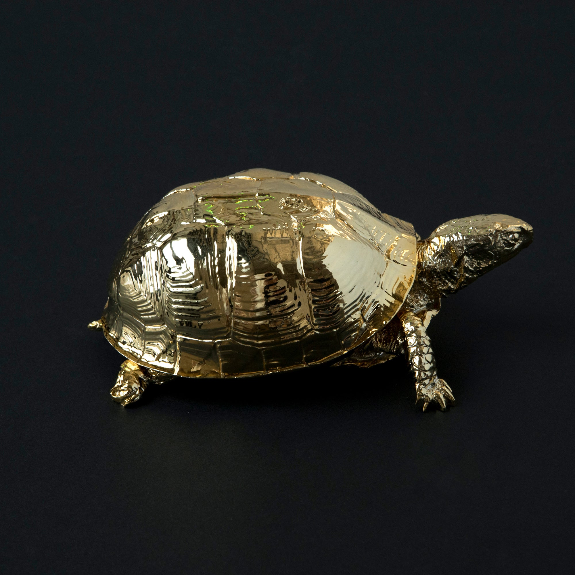 Gold Turtle Box