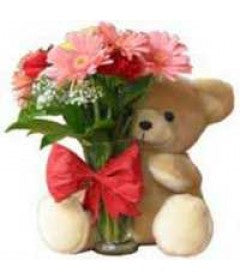 12 Pink Gerberas Bunch and 1 Teddy Bear - GoSendGift.com