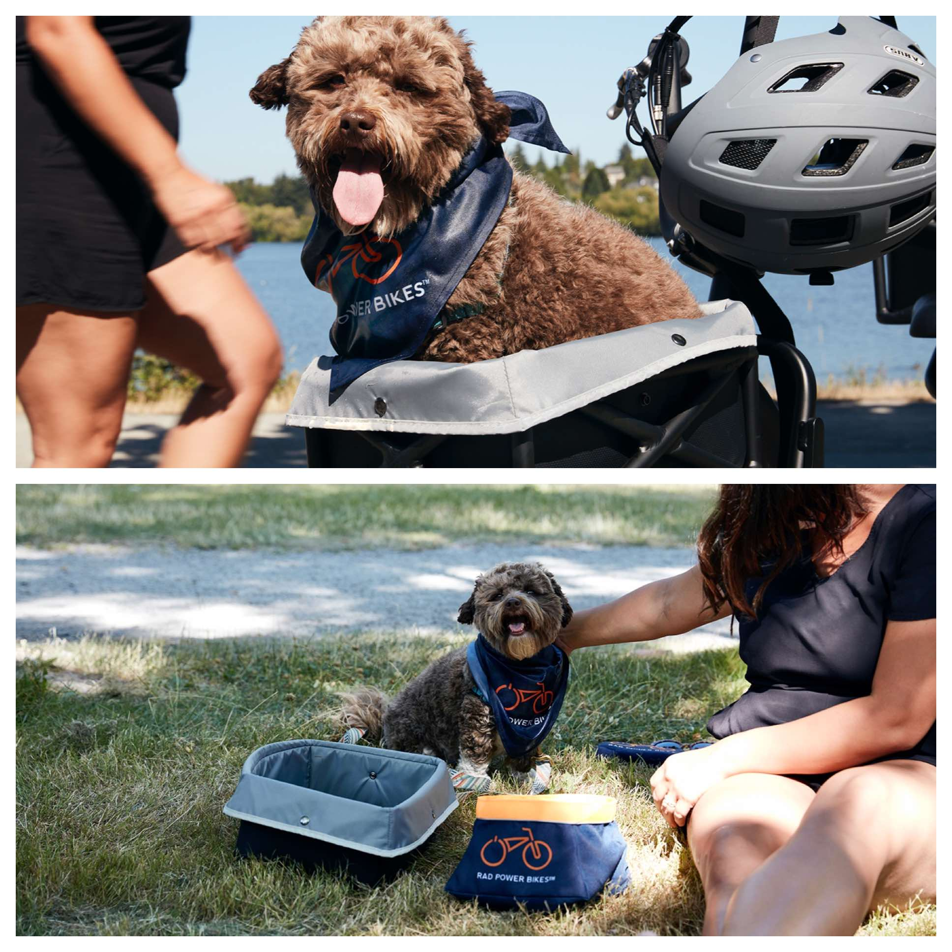 Two pictures of small dog, one where he is nestled in Rad's new pet carrier and the other where he is by the Rad Power Bikes portable water dish.