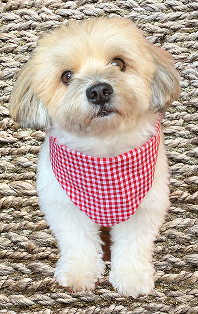 Holiday Doggy Bandana - Reversible