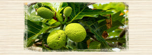 The Gift of Ku: Story of ʻUlu (Hawaiian Breadfruit)