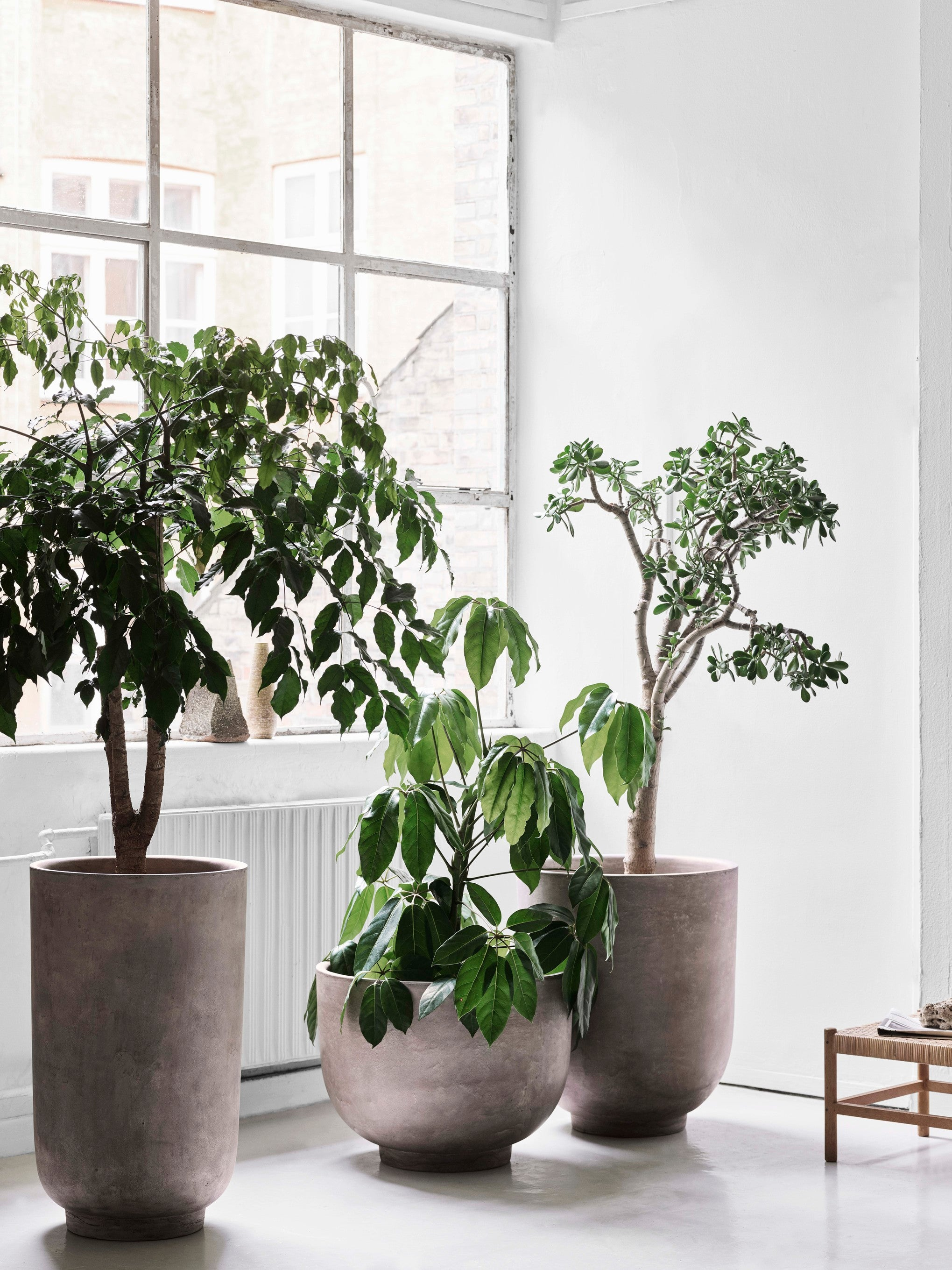 Collect Plants SC43 Small, Shadow Grey fra &tradition