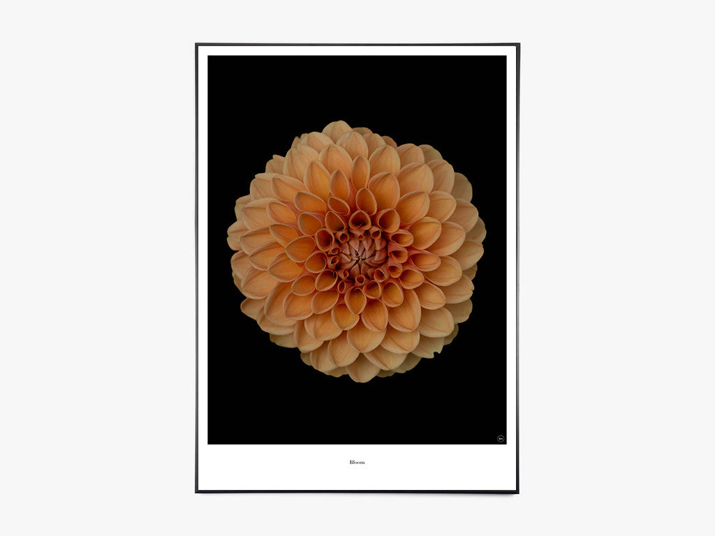 Bloom - Beautiful World Plakat fra Beautiful World