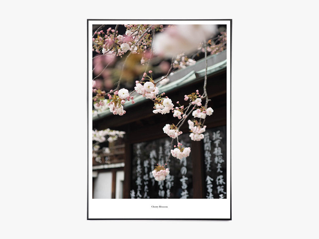Cherry Blossom - Beautiful World Plakat fra Beautiful World