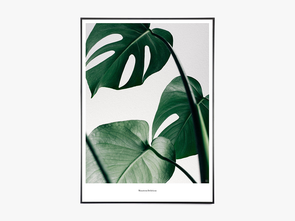 Monstera - Beautiful World Plakat fra Beautiful World