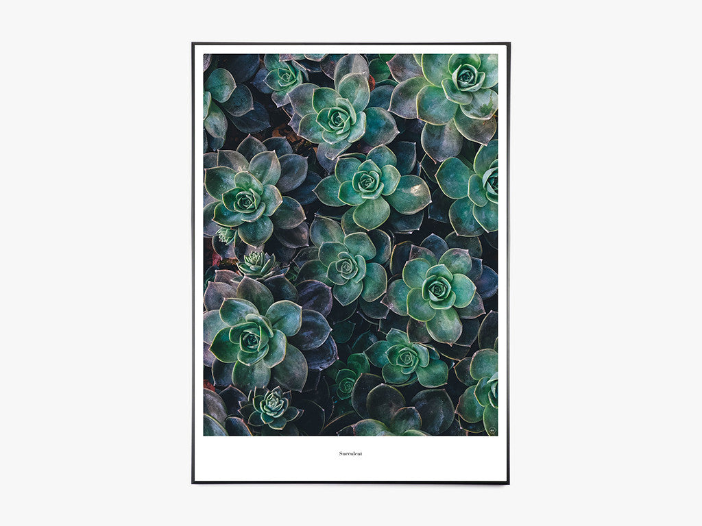 Succulent - Beautiful World Plakat fra Beautiful World