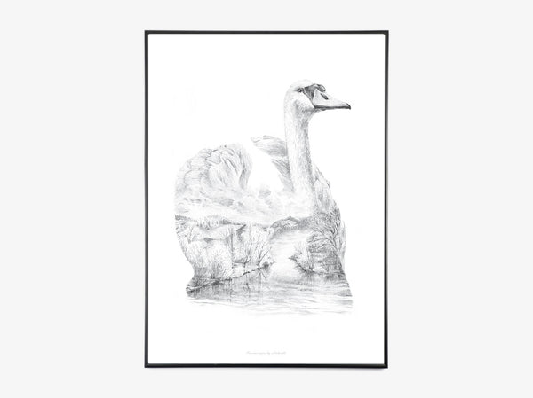 Swan Pencil Drawing fra What We Do