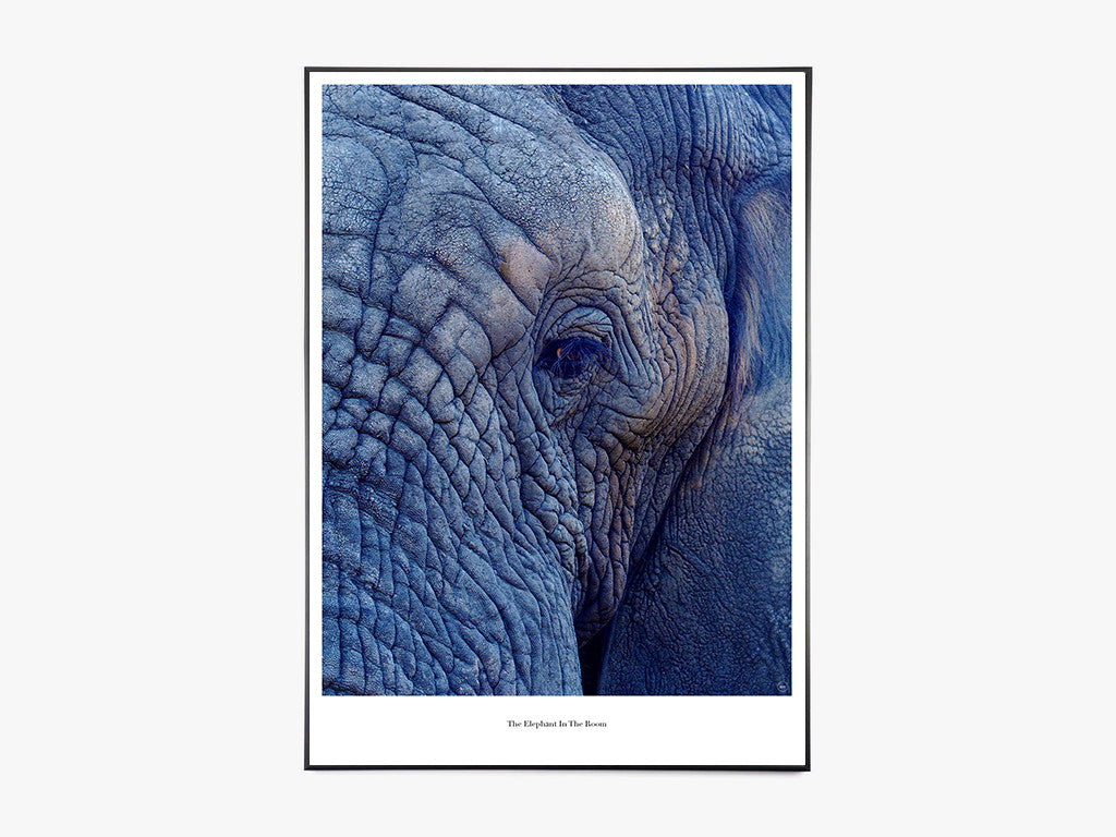 The Elephant In The Room - Beautiful World Plakat fra Beautiful World
